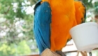 a-inteligencia-e-carisma-das-aves-psitaciformes_11