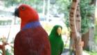 a-inteligencia-e-carisma-das-aves-psitaciformes_2