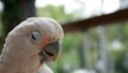 a-inteligencia-e-carisma-das-aves-psitaciformes_4