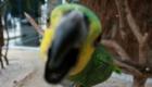 a-inteligencia-e-carisma-das-aves-psitaciformes_6