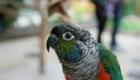 a-inteligencia-e-carisma-das-aves-psitaciformes_8