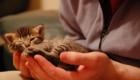 felinos-os-novos-melhores-amigos-do-homem_12