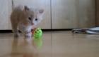 felinos-os-novos-melhores-amigos-do-homem_13