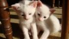 felinos-os-novos-melhores-amigos-do-homem_14