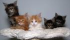 felinos-os-novos-melhores-amigos-do-homem_2