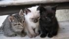 felinos-os-novos-melhores-amigos-do-homem_4