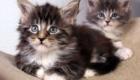 felinos-os-novos-melhores-amigos-do-homem_7