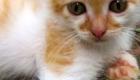 felinos-os-novos-melhores-amigos-do-homem_9