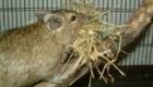 fofos-roedores_2