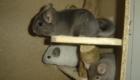 fofos-roedores_3