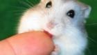 fofos-roedores_5