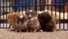 fofos-roedores_6