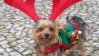 caes-festejam-o-natal_5