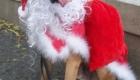 caes-festejam-o-natal_8