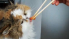 gatos-amam-comida-japonesa_10