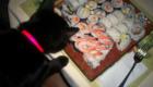 gatos-amam-comida-japonesa_11