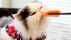 gatos-amam-comida-japonesa_5