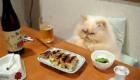 gatos-amam-comida-japonesa_7