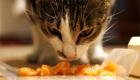 gatos-amam-comida-japonesa_8