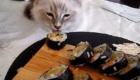gatos-amam-comida-japonesa_9