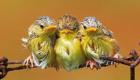 angry-birds-da-vida-real_2