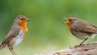 angry-birds-da-vida-real_3