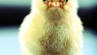 angry-birds-da-vida-real_6