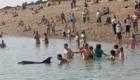 golfinhos-viram-atracao_2