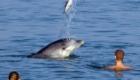 golfinhos-viram-atracao_3