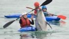golfinhos-viram-atracao_5