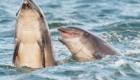 golfinhos-viram-atracao_7