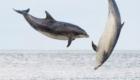 golfinhos-viram-atracao_8