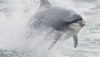 golfinhos-viram-atracao_9