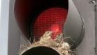 passarinhos-fazem-ninhos-nos-lugares-mais-estranhos-possiveis_10