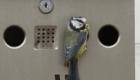 passarinhos-fazem-ninhos-nos-lugares-mais-estranhos-possiveis_11