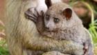 animais-fazem-pose-ao-lado-dos-filhotes_1