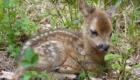 animais-fazem-pose-ao-lado-dos-filhotes_5