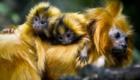 animais-fazem-pose-ao-lado-dos-filhotes_8