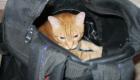 mala_gatos