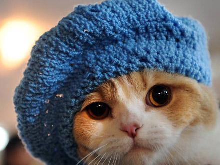 Cuide bem do seu pet na época de frio