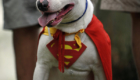 Super-Cão