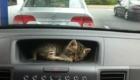 Você está dirigindo e, de repente...