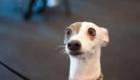 cachorro-cara-de-assustado