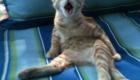 gatinho-assustado