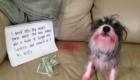 Fui até a bolsa da minha mãe enquanto ela dormia, comi o batom mais vermelho que encontrei e ainda masquei 3 notas de 1 dólar!
