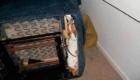 cachorro-embaixo-sofa