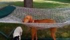cachorro-enrolado-na-rede