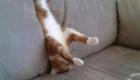 gato-no-sofa