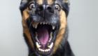 cachorro-assustado