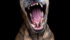 cachorro-de-boca-aberta